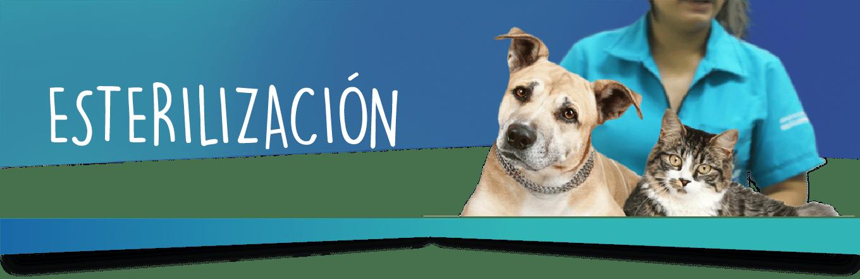 ESTERILIZACIÓN-02